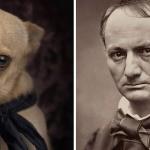 Psy ze schroniska podobne do słynnych pisarzy