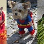 Psy przebrane za znane postacie literackie i komiksowe