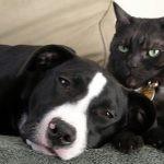 Miłośnicy kotów i psów czytają zupełnie inną literaturę?