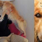 """""""Był sobie pies"""" – bestsellerowa powieść o psie, który miał wiele żyć, w księgarniach od 1 lutego"""