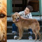 """""""Był sobie pies"""" – ekranizacja powieści W. Bruce'a Camerona najpopularniejszą premierą ubiegłego weekendu"""