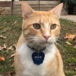 Max ? kot, któremu zabroniono wchodzenia do biblioteki, zyskał sławę w prasie i w Internecie