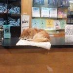 Chester ? pies, który został księgarnianym kotem