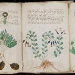 Sztuczna inteligencja pomocna w rozszyfrowaniu Manuskryptu Wojnicza?