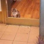Islandia: kot pilnujący nocą księgarni wzbudził sympatię internautów