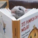 Szczur Vincent pomaga dzieciom w nauce czytania