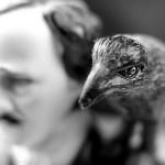 Ogłoszono nominacje do Nagród im. Edgara Allana Poe 2013