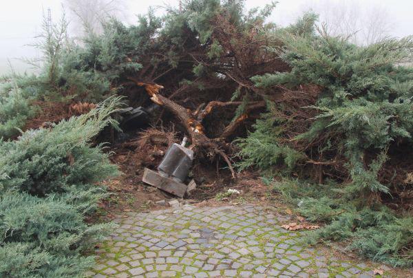 pomnik poety staranowany - 3