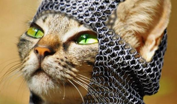 sredniowieczny-kot-sika