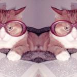 20 wypowiedzi znanych pisarzy o kotach