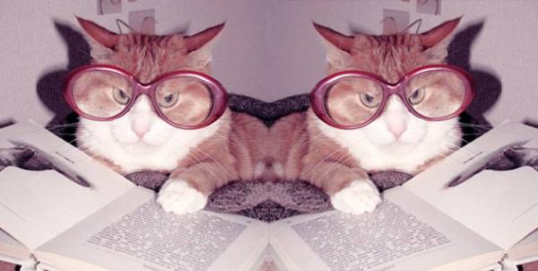 20 wypowiedzi o kotach
