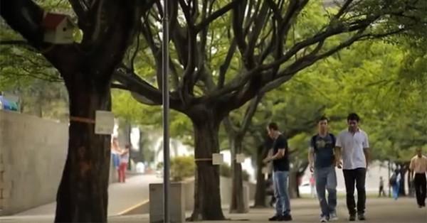 drzewa-oferuja-ebooki