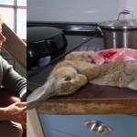 Jeanette Winterson zabiła, obdarła ze skóry i ugotowała królika. Część fanów oburzona