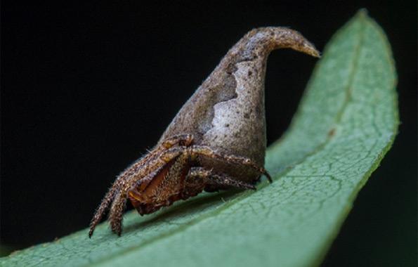 pajak-tiara-przydzialu-1
