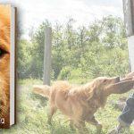 """Życie z perspektywy psa – fragment premierowej powieści """"Był sobie pies"""" W. Bruce'a Cameron'a"""